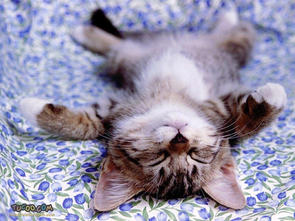旷工后无敌愧疚的猫猫~它装死呢~~